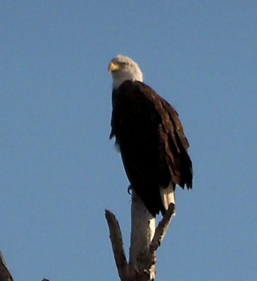 FL 33029 - Eagle