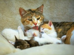Mama cat licking her young. This is what you'd have to do with the washcloth....
