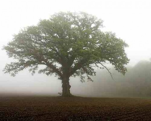 - The Mustard Tree. -