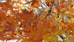 A Pagan Thanksgiving:  Autumn Equinox, Mabon, September 21