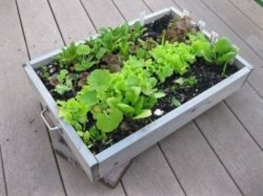 Salad Box by Mac33