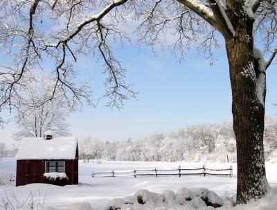 Winter's Quiet Beauty