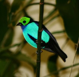 Bird Belly