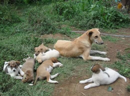 Melita and her puppies