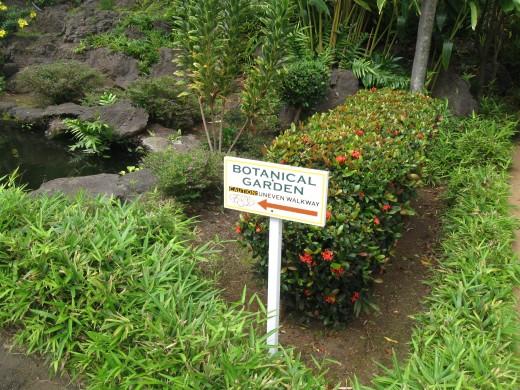 A stroll in their botanical garden
