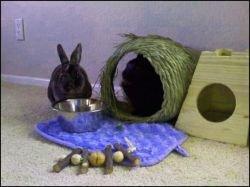 The elusive Little Bun enjoys some leafy greens with her husbun.