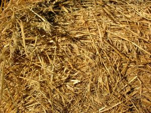 Straw for the horses and cows in the barn