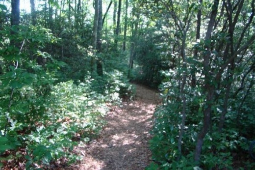 One of the trails at Ash Grove.