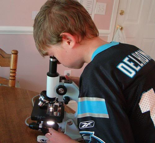 My son enjoys viewing things under a microscope.