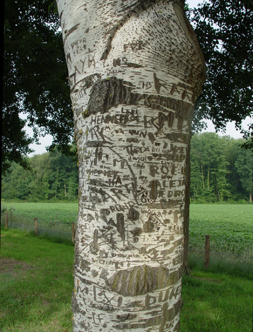 A Birch tree with cut in names