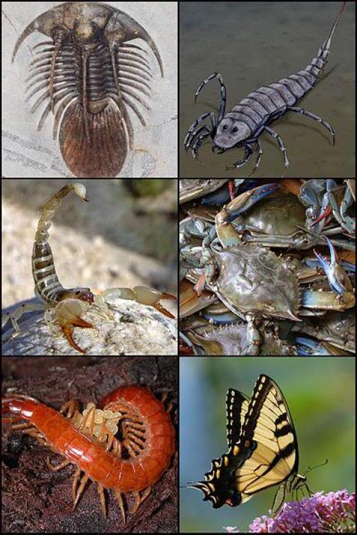 Arthropods