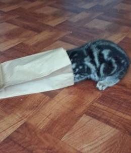 Kitten in a Bag