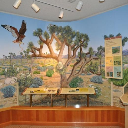 Joshua Tree Visitor's Center