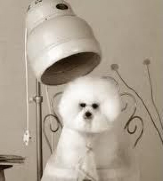 Pet Hair Dryer