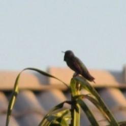Confessions of a Backyard Birder
