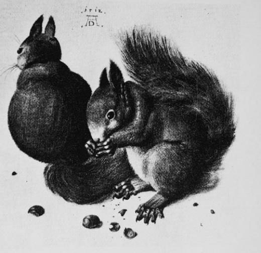 Albrecht Durer - Squirel print