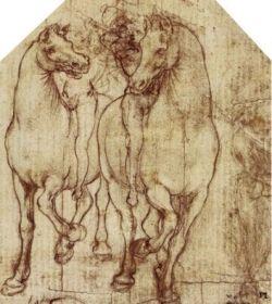 horse drawing by leonardo da vinci