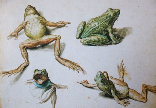 As it happened, I had this frog drawing by Jacob de Gheyn II laying around for years but never thought about it to share it with you. :-(