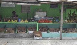 Roadside market in St. Martin