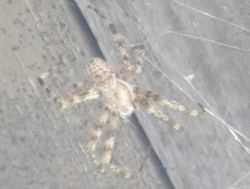This is a bona fide Yucky Spider
