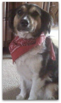 """""""Yes ma'am...how may I serve you, ma'am?"""" (but not so sure about the bandanna. She chewed it later."""