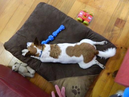 Eddie loves lying on his tummy!