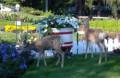 How To Deer Proof Your Garden