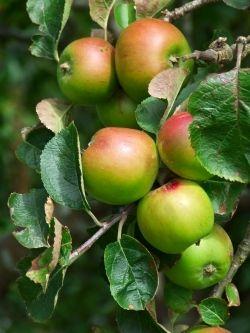 Make ahead apple bread mix