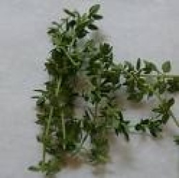 Herbal Tinctures Herbs