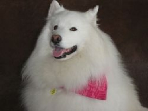 Diabetic Dog c bossypants