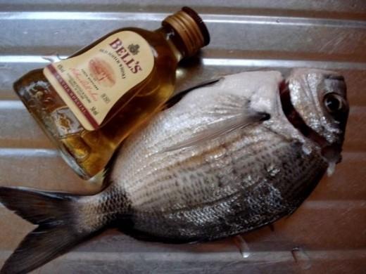 fish size