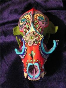 Hand Painted Racoon Skull