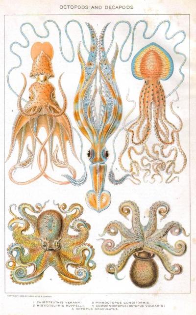 Squid Curiosities