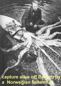 Squid Captured Alive by Norwegian Fisherman