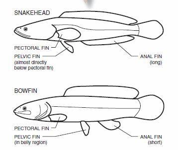 Frnkenzilla Anatomy
