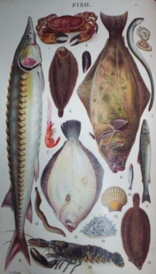 Mrs Beeton's Fish Illustration