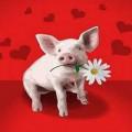 Pig idioms