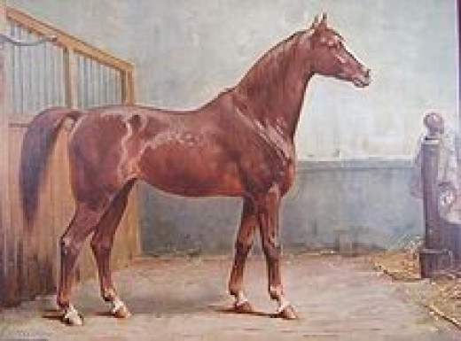 An 1898 print of an Hanoverian Horse