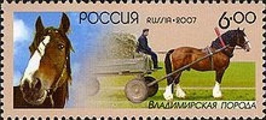 Vladimir Horse                source: Wikipedia