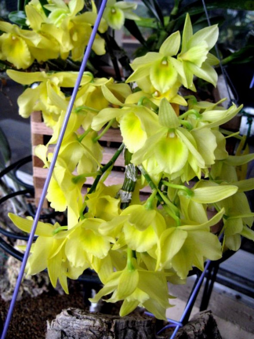 Shades of lime green and lemon here - they look good enough to eat!