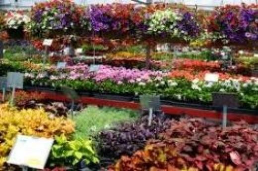 Pesches Greenhouse