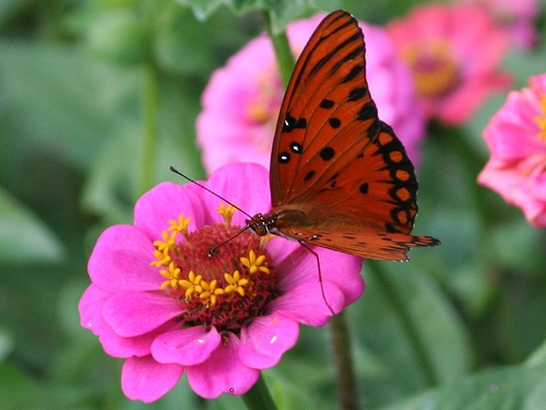 By James Emery, flickr (www.flickr.com/photos/emeryjl/456175019)