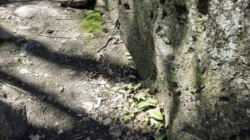 Around back of boulder.