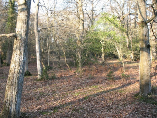 Wooded area of The New Forest
