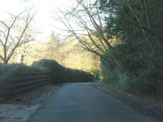 Narrow road in The New Forest