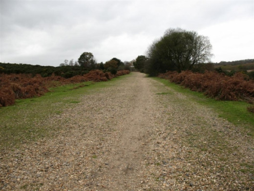Disused railway line in The New Forest