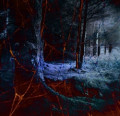 Mirkwood Forest in the Hobbit