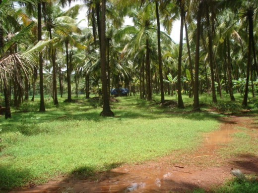 kerala village scenery original pictures of typical
