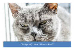 How Often Should You Clean A Cat Litter Box?