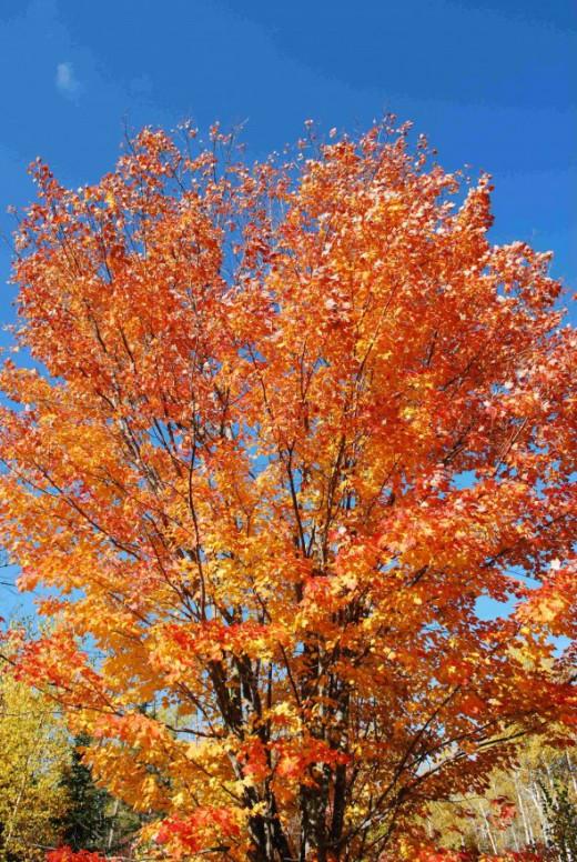 Blazin Tree?